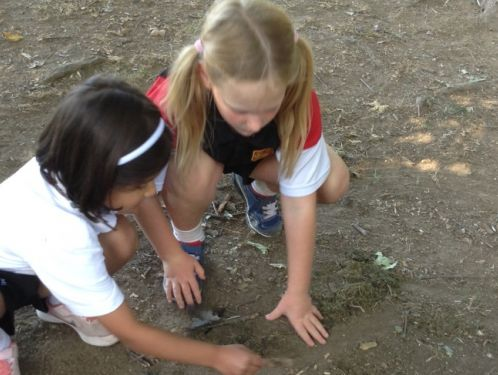 Year 2 make miniature Minpin homes in Forest School