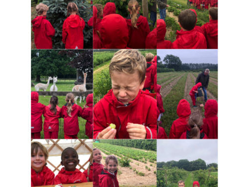 Year 1 trip to Peterley Manor Farm
