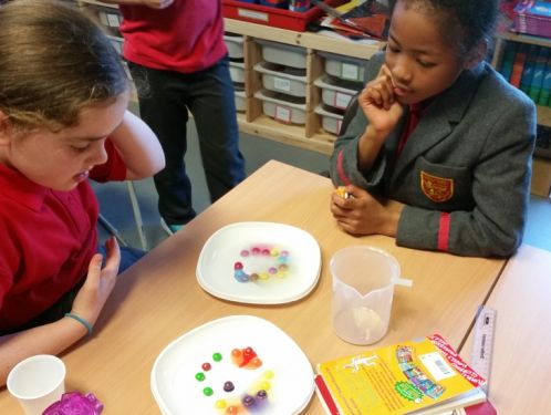 Year 4 plan and conduct their skittles investigations