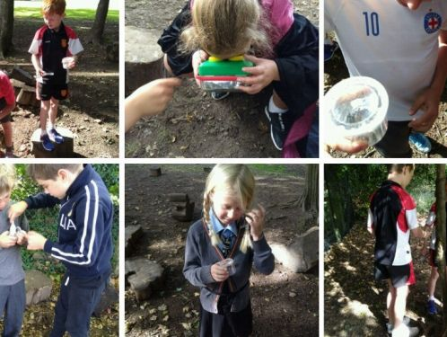 Year 4 hunt for marvellous minibeasts in school microhabitats