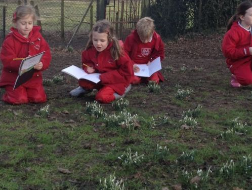 Year 2 sketch snowdrops during Forest School