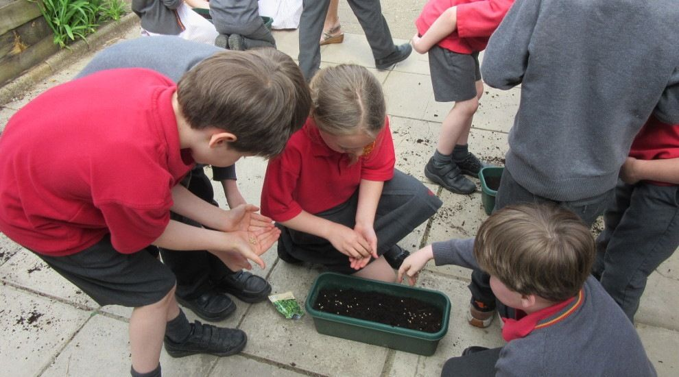 Year 2 plant a mixture of salad seeds