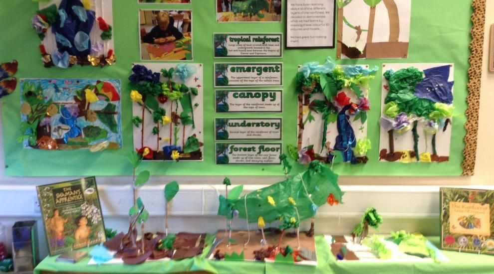 Year 4 discover the wonders of the rainforest