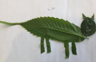 Hugo Leaf Art Genius Hour