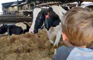 Year 4 farm2