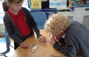 Year2 using magnifying glass
