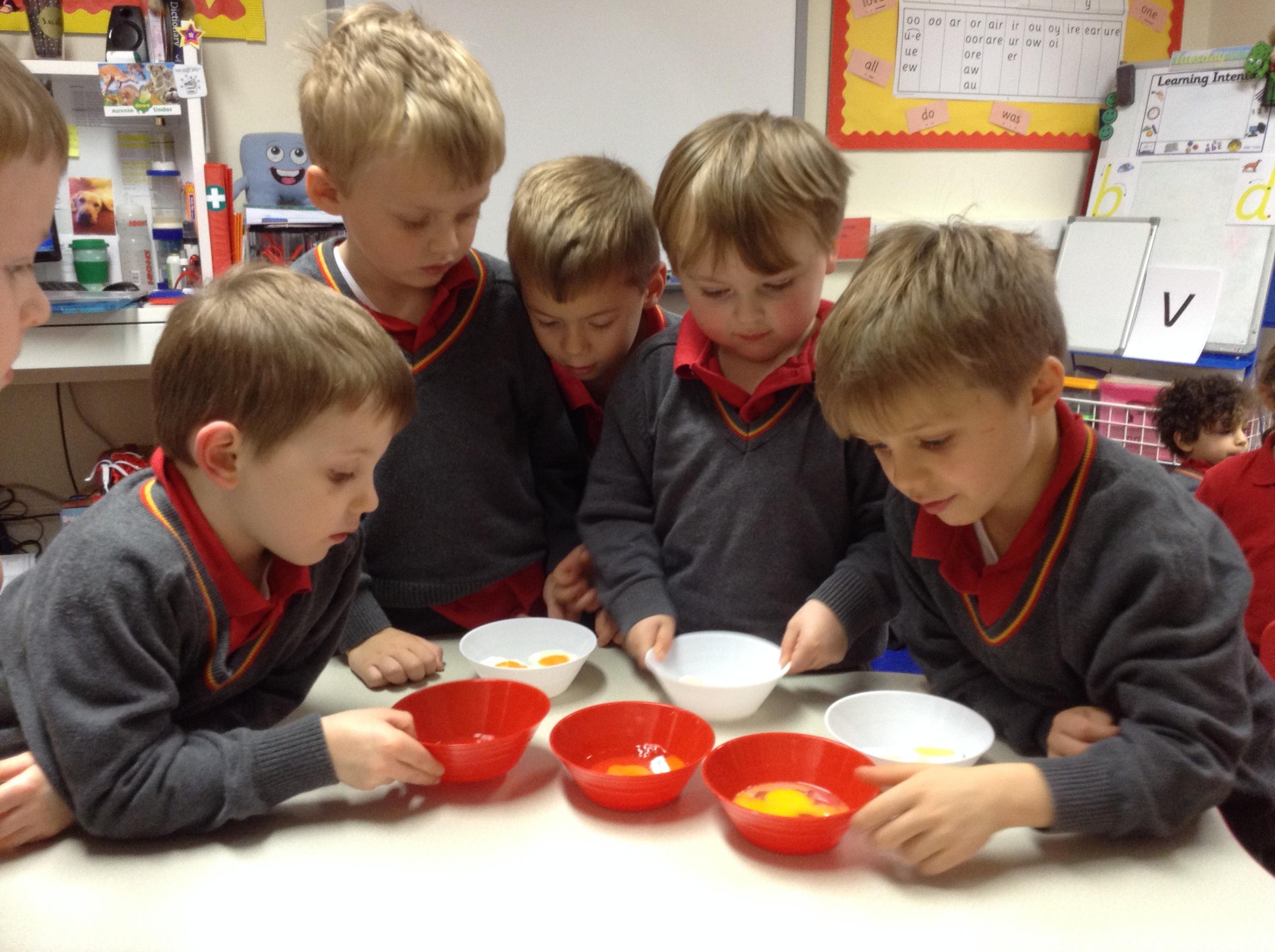 Reception's eggciting eggsperiment!